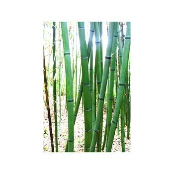 optez pour des bambous pour parfaire votre jardin bricolo blogger. Black Bedroom Furniture Sets. Home Design Ideas
