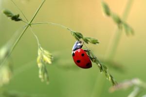 insectes utiles dans notre jardin