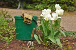 fleurs pour son jardin