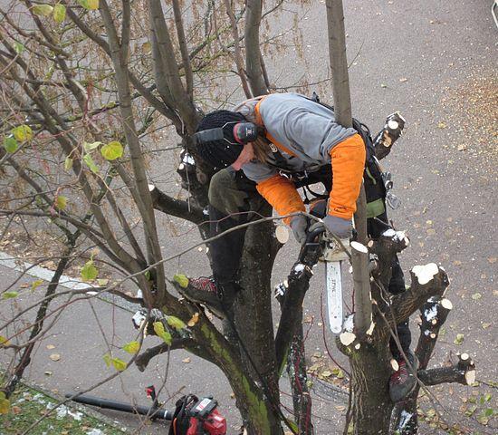 Couper les branches d'arbres