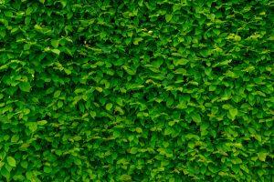 isolation phonique de jardin
