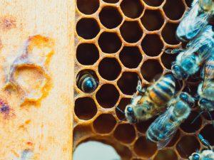 Construction d'une ruchette